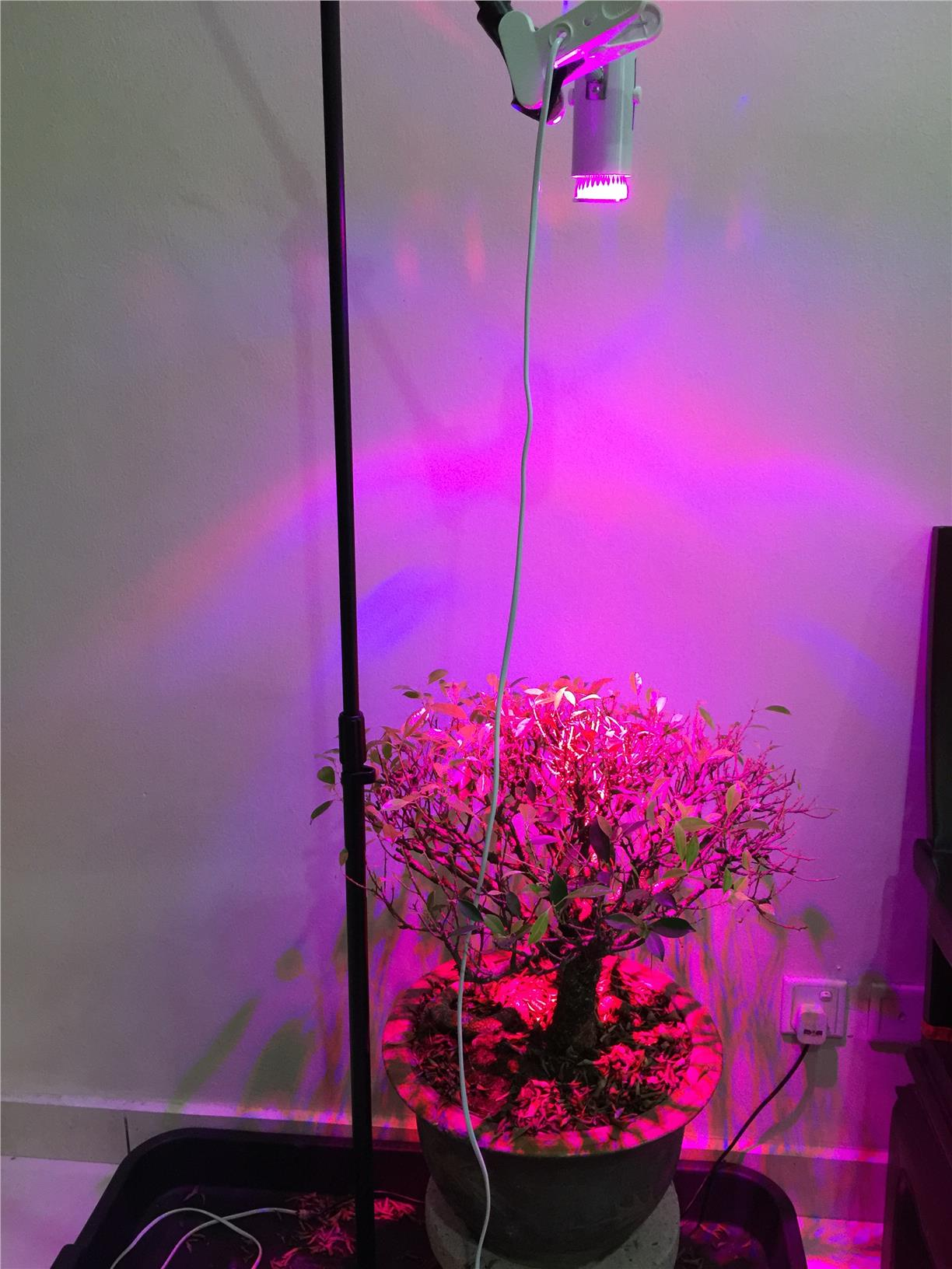 7w Led Grow Light For Indoor Plants End 4 12 2016 1 15 Pm