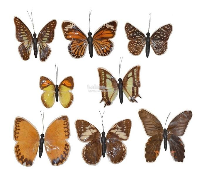 8 pcs Real Specimen Butterfly Fridge Magnet Gift Collection Decoration