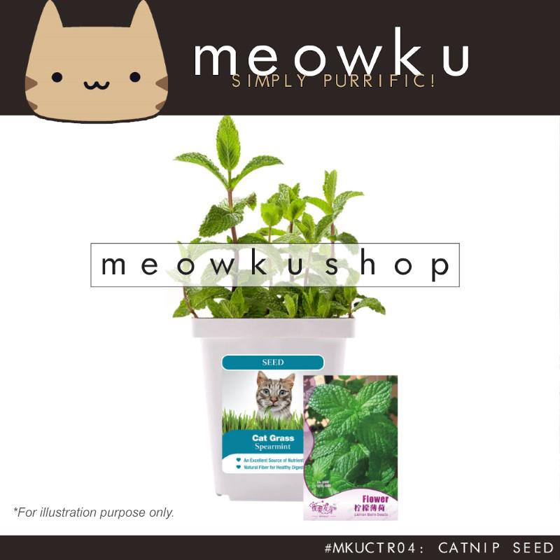 Catnip Seed (Cat Pet Aromatic Seeds Plants Easy To Grow Handy Diy)