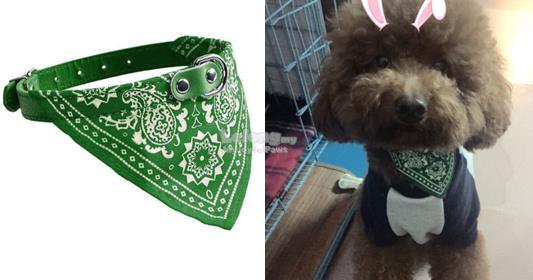 Dog Clothes / Apparel : Green Scarf