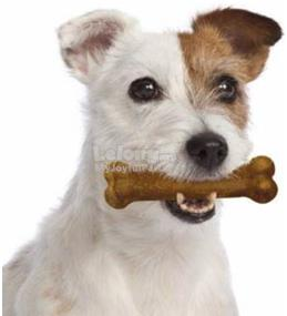 Dog Toy: Nylabone Puppy Chew Chicken ​(Imported)