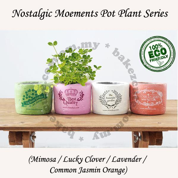 Flower Gift-Nostalgic Moments Home Décor Plant Pot Garden Kit Series