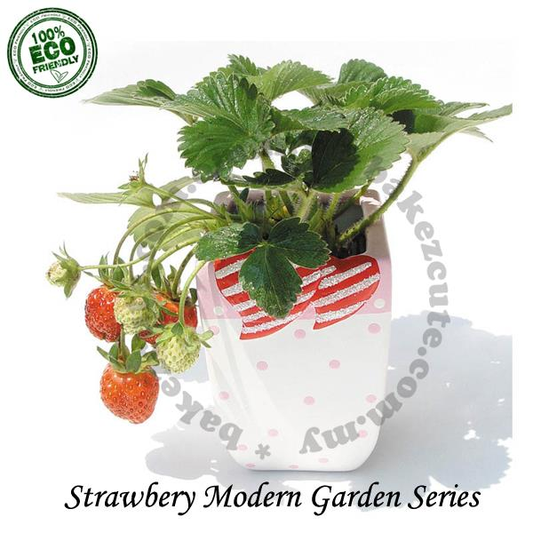 Home Decor Set - Strawberry Modern Fruit Garden - DIY Pot Plant Kit