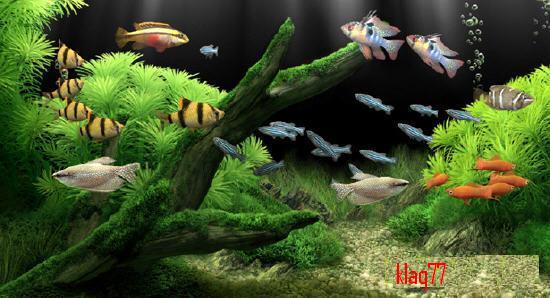 Portable Dream Aquarium Screensaver v1.24
