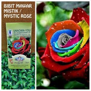 Rare mystic rainbow rose bush flower end 1 1 2018 11 59 pm for Growing rainbow roses from seeds