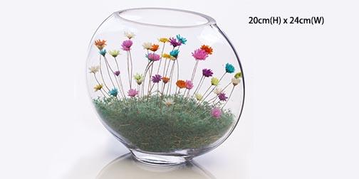 Secret Garden Indoor Real Small Mini Pet Flower - Flat (Giant)