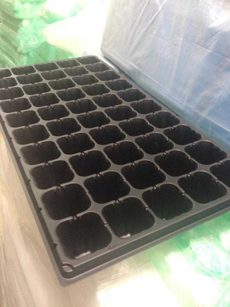 Seeding Tray & Grow Tray @50 Holes