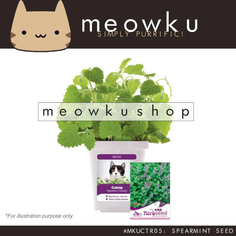 Spearmint Seed (Pet Cat Aromatic Seeds Plants Easy To Grow Handy DIY)