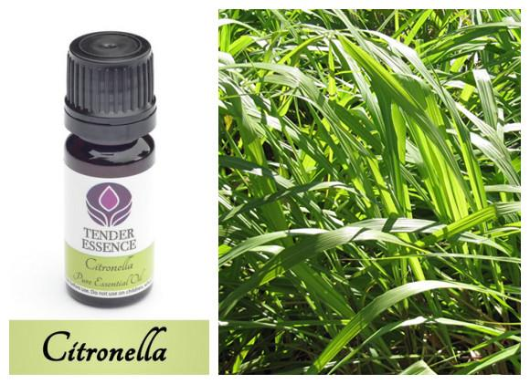 Tender Essence, 100% Pure Citronella Essential Oil (10ml)