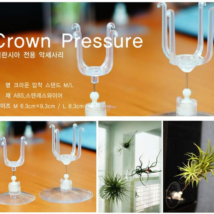 Tillandsia Air Plants Accessories - Crown Pressure Holder (M Size)