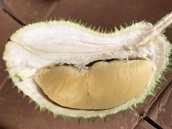 Delightful organic durian buffet (June - Sept 2019) - Testing dun buy
